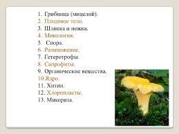 Плесневые грибы Дрожжи Назад