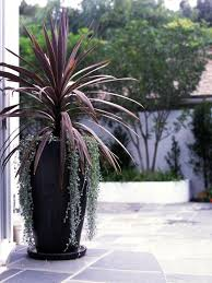 potted plants outdoor