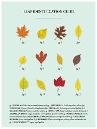 Leaf Identification Guide Bonsaivault Com