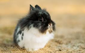Wallpaper Cute rabbit, black white ...