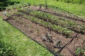 garden dome. Dome Style Pond \u0026 Garden Ultra™ Nets By Atlantic®