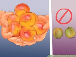 How To Select And Store Apricots 10 Steps With Pictures