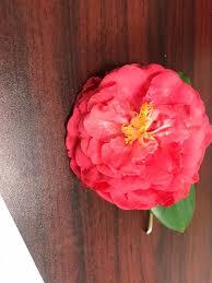 Thank you Myrna Shelton for my beautiful... - Gardner Realtors Garden  District   Facebook