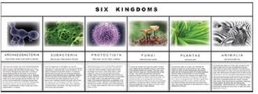 Six Kingdom Chart