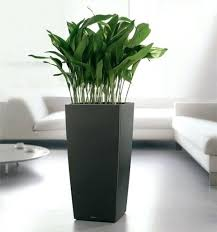 decorative indoor plant pots 7 top risks of attending indoor decorative plant  pots welcome for you . decorative indoor plant pots ...