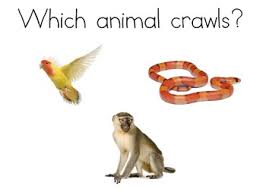 Animals That Crawl And Fly Worksheets Teaching Resources Tpt