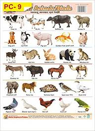 Pet Animal Picture Chart Buy Wall Charts Of Plastics Non Tearable Of Pet Animals Book