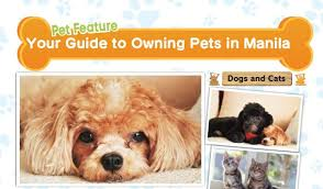check out this special feature to find pet s in manila and get some tips on how to keep your pets healthy