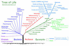 Plant Taxonomy Plant Kingdom Classification Chart