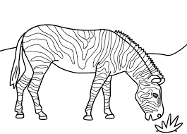 Small Picture zebra coloring pages 15
