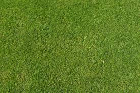 Widescreen Grass Texture Images | Glady Momon - HD Wallpapers