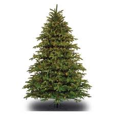 9 ft. x 54 in. - Slim Alaskan Deluxe Fir - Barcana