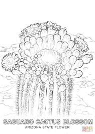 Small Picture Arizona State Flower coloring page Free Printable Coloring Pages