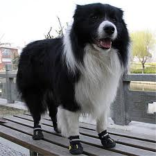 Qumy Dog Boots Size Chart Qumy Dog Boots Waterproof Shoes For Large Dogs With Reflective Velcro Rugged Anti Slip Sole Black 4pcs