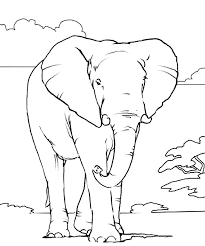 Adults just love to color elephant coloring pages because if we make designs on elephants then they become very difficult to color. African Elephant Coloring Page African Elephant Free Printable Coloring Pages Animals