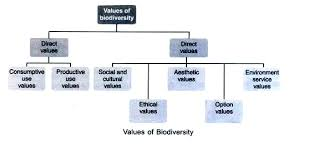 main values of biodiversity explained 8 main values of biodiversity explained