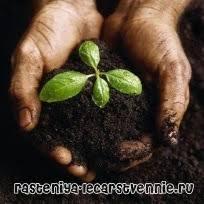 Роль растений в жизни человека и природы Популярно о здоровье Роль растений в жизни человека и природы