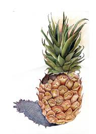 pineapple drawing step by step. what is your favorite colored pencil book and a pineapple drawing? - wetcanvas drawing step by