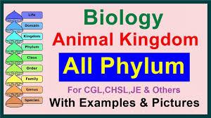 All Phylum Kingdom Animalia Biology