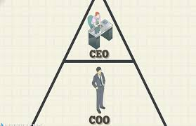 Coo Org Chart Chief Operating Officer Coo