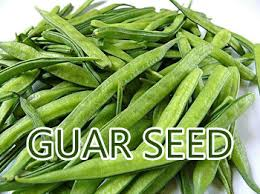 Image result for Guar seed