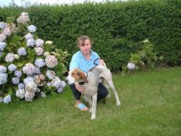 Kerry Beagle Association