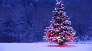 ... Delightful Pictures Of A Christmas Tree Tittle ...