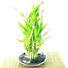 small office plant. Small Plant For Office Desks Plants Best Desk Ideas On Decor Indoor That