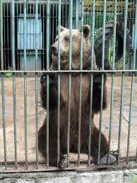 zoo animals in cages. Unique Animals What Do Zoos Teach About Biodiversity And Does It Matter  Psychology Today With Zoo Animals In Cages Z