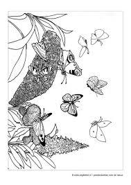 Zeg Kleine Vlinder Prentenboek Voor Peuters En Kleuters