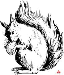 Small Picture Squirrel with Nut Drawing Clipart Free Clipart Design Download