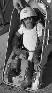 Хэм (шимпанзе) — Википедия