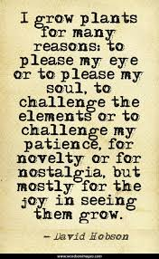 Quote Garden Magnificent Love Quotes Quote Garden Love Quotes