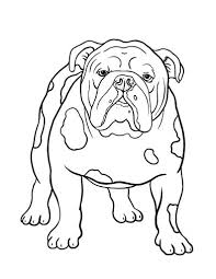 Small Picture 64 best Dogs images on Pinterest Animals Adult coloring and