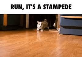 corgi puppy stampede gif. Exellent Corgi Animated GIF Stampede Free Download With Corgi Puppy Stampede Gif U