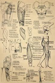 academic work from my time at columbus college of art design in figure drawing and anatomy cles sorry for the parchment that looks like skinny hoping
