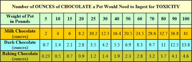Chocolate Toxicity Chelmsford Dog Association