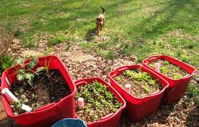Small Picture Creative Container Gardening Ideas