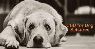 hemp oil for dogs seizures