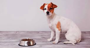 20 Best Dog Food For Puppies 2019 A Buying Guide