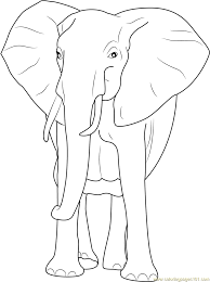 Small Picture African Bush Elephant Coloring Page Free Elephant Coloring Pages