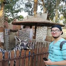"""A """"zebra"""" Reckon - Is People Nine com au Actually This Some Donkey"""