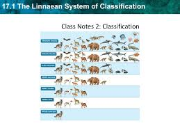 17 1 The Linnaean System Of Classification