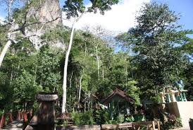10 Best Khao Sok National Park Images On Pinterest  National Khao Sok Treehouse