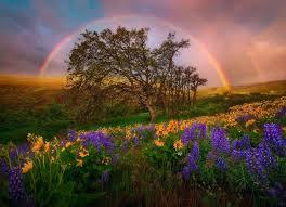 natural framing photography tumblr. Rainbow Landscape Photography Natural Framing Tumblr I