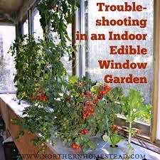 indoor tomato garden. Trouble-shooting In An Indoor Edible Window Garden Tomato