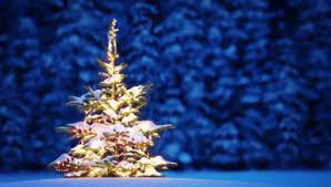 Bilderesultat for juletre