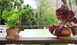 vegetable gardening indoors starting a vegetable garden indoors
