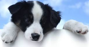 black and white dog names easy to