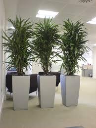 office plant pots. division psychologique et zen cool dracaena plants in silver cubico lechuza planters! great for low lighting office plants! plant pots